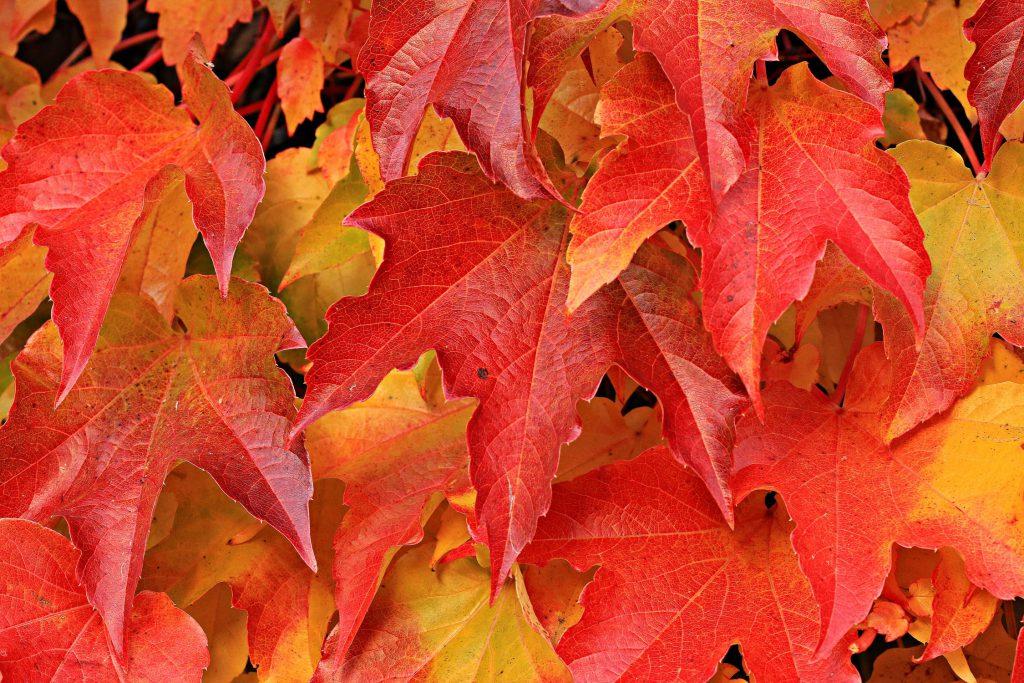 Zabiegi kosmetyczne jesienią - które wybrać?